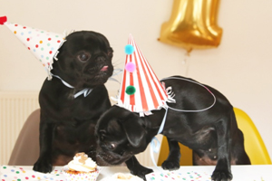 10 Cool Tips To Make Your Pug Birthday Idea Fun And Memorable