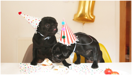 Happy Birthday Dogs Black Dog Eating Others Cake