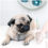 Dog Vaccinations For Your Pug: A Quick Guide